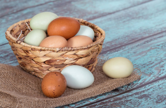 Eggs Not Linked to Cardiovascular Risk