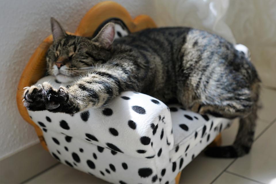 cat-2360863_960_720.jpg