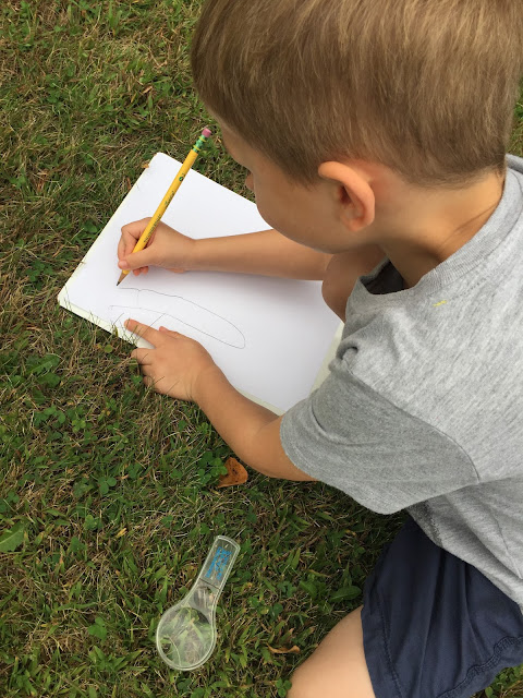 observational drawing during fall nature walk