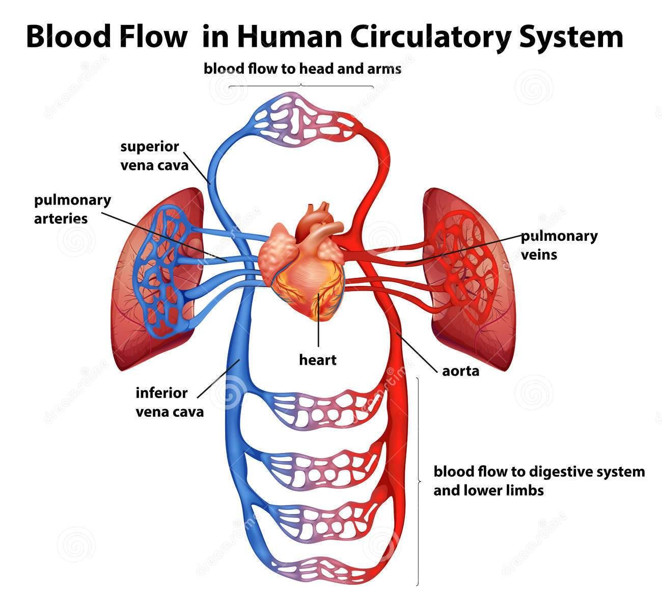 Definition of Coronary Heart Disease | 17