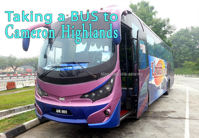 Taking a Bus to Cameron Highlands