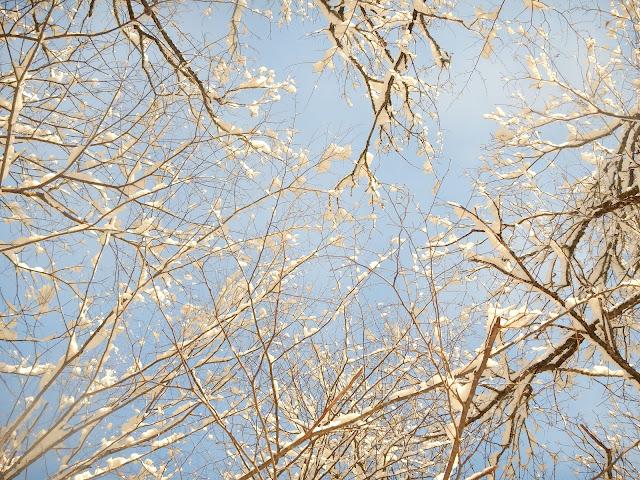 Зимние ветви