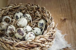 Manfaat Telur Puyuh pada Burung Kenari