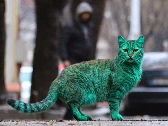 green cat varna bulgaria