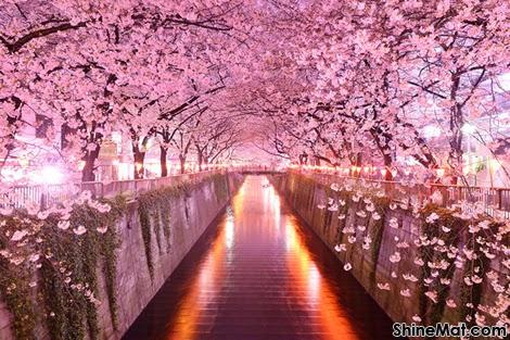 Sakura Tunnel, Tokyo, Japan