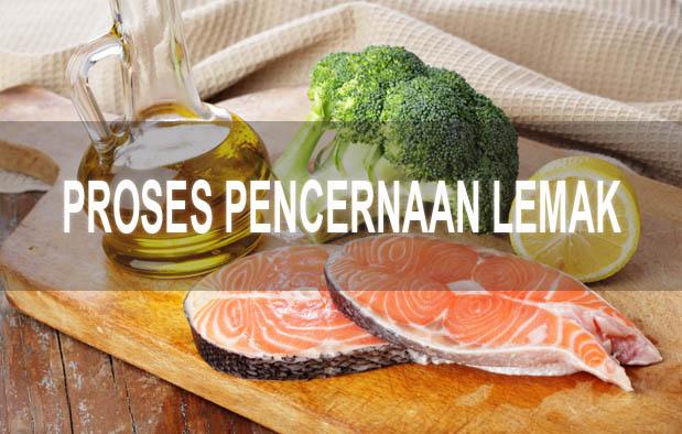 Bagaimana Proses Metabolisme Lemak