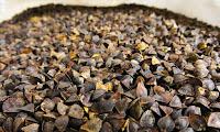 Kara Buğday Tohumu Fotoğrafı