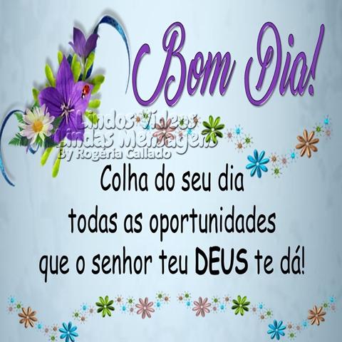 Bom Dia! Colha do seu dia  todas as oportunidades  que o Senhor teu DEUS te dá!