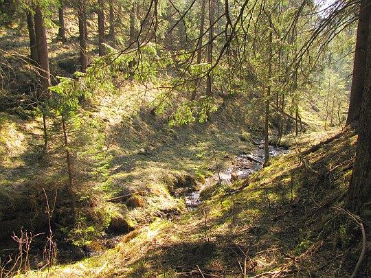Potok w Szerokim Żlebie.