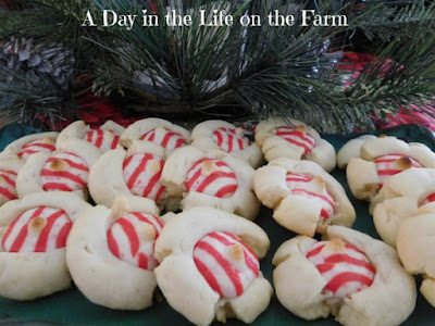 A Day In The Life On The Farm Candy Cane Kissed Shortbread Cookies
