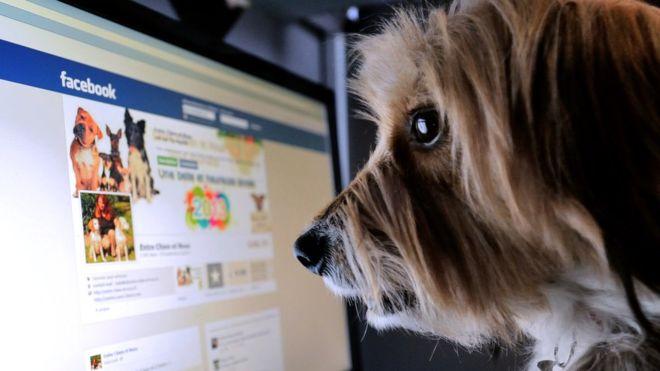 Facebook: cómo puedes bloquear los avisos publicitarios que no quieres ver