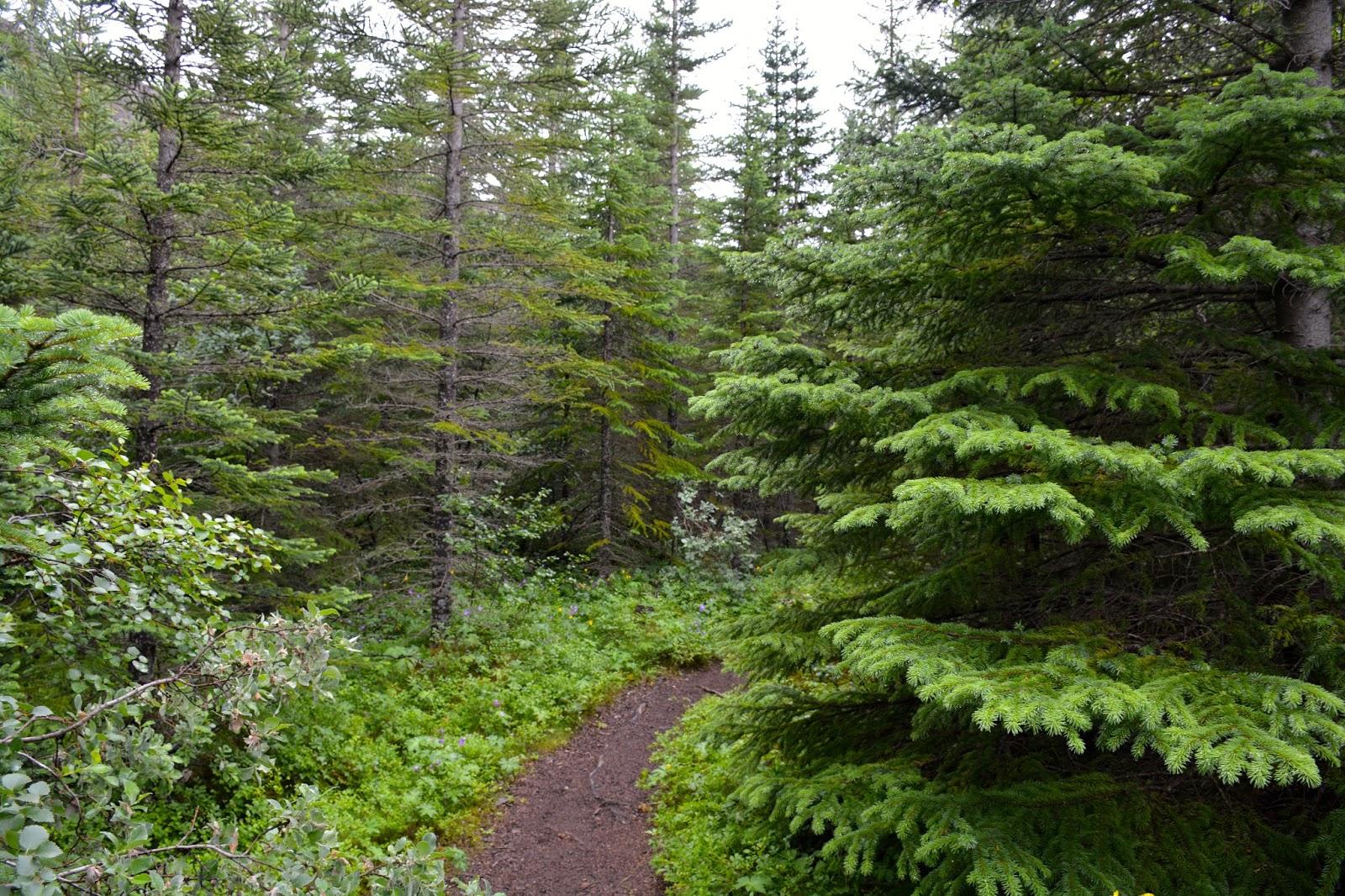 Floresta Temperada de Coníferas