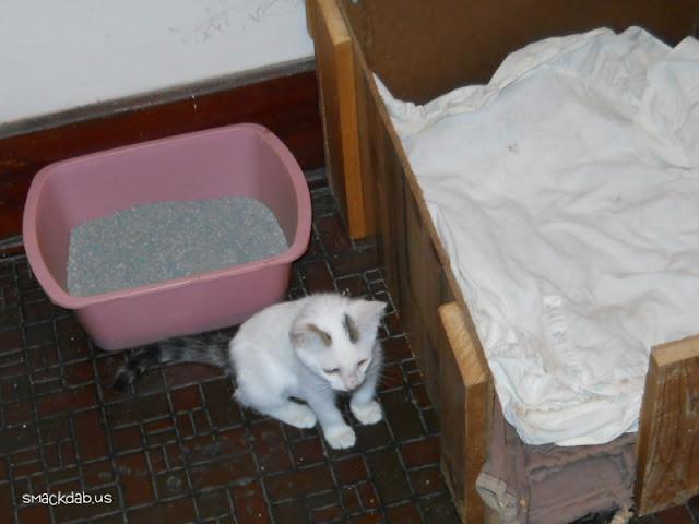 A New Kitten