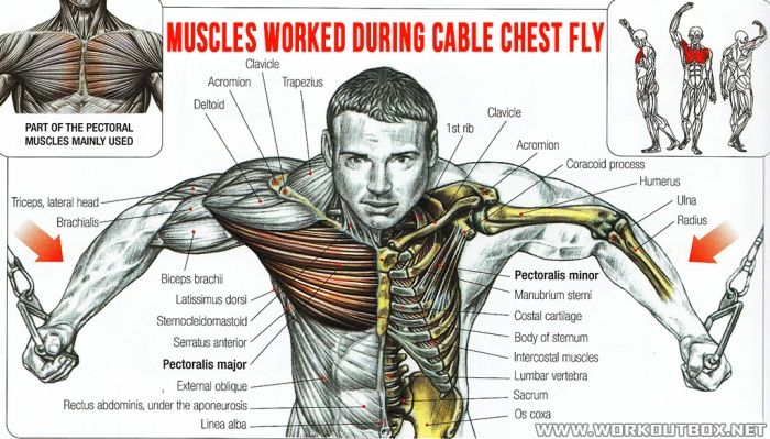 The 8 Best Full Gym Chest Workout Www Bodybuilding110 Com