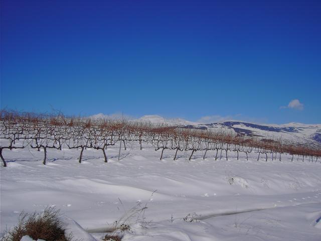 Los Barrancos S.L. aus Andalusien zum WeinWinter auf Langeoog
