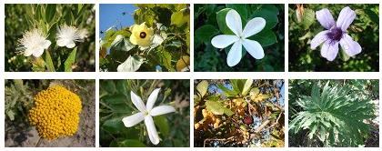 Fotos de arbustos ornamentales