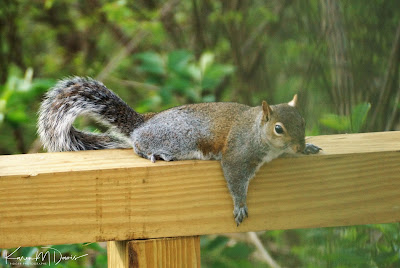 squirrel lounging on beam
