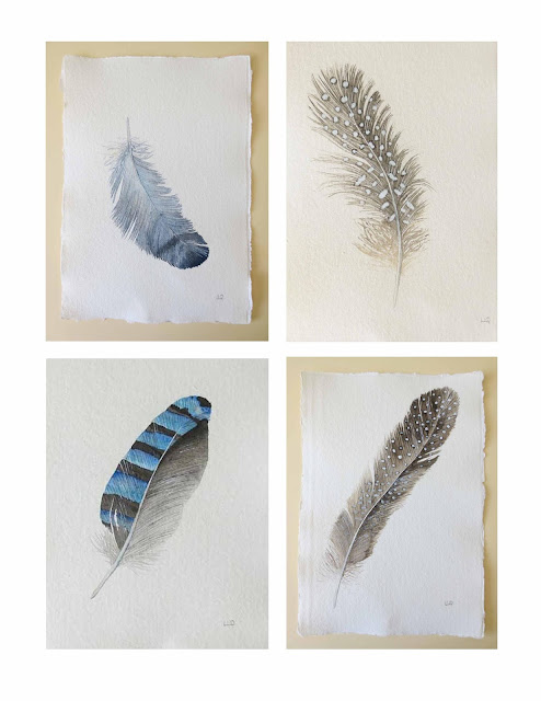 four watercolour feather paintings by lisa le quelenec guinea fowl jay pigeon feathers