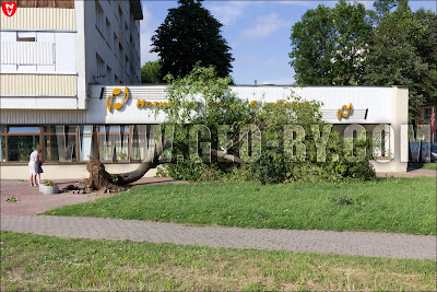 Минск. Нотная библиотека. Дерево вырванное с корнем ветром 13 июля