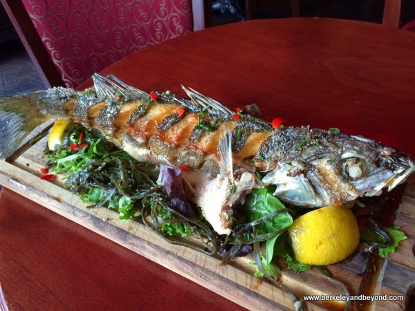 Branzino Chinese striped sea bass at Bobo's Lounge in San Francisco