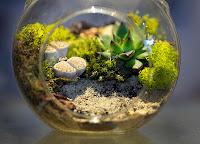 Cómo construir tu propio Terrarium