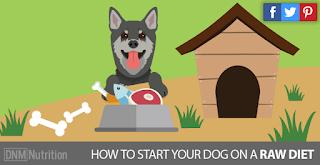 http://www.dogsnaturallymagazine.com/raw-feeding-primer/