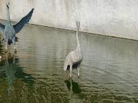 大阪天満宮 星合池 水鳥の像