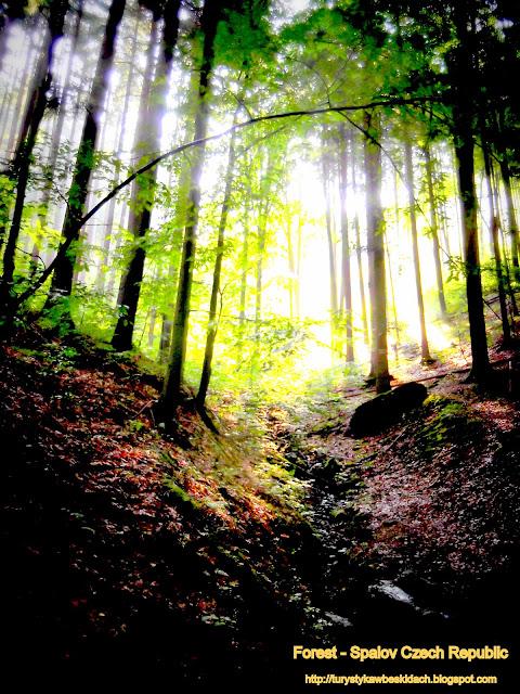 Las na Riegrovej Ścieżce Spálov - Semily