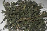 daun sambiloto kering untuk ramuan obat