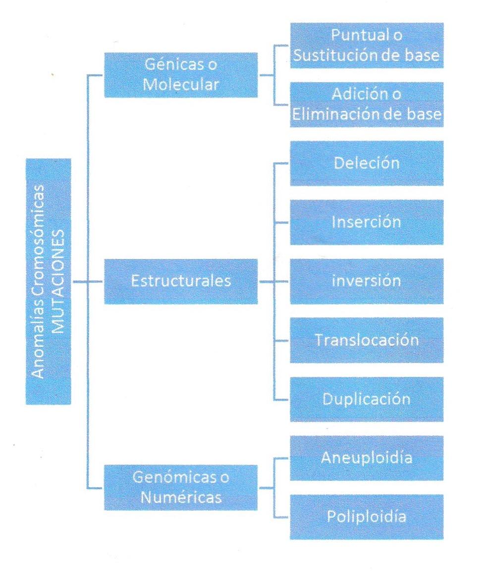 La Célula Tipos De Mutaciones Cromosómicas