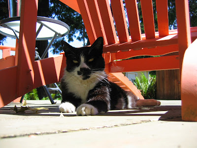 Jasper the cat on his deck outside