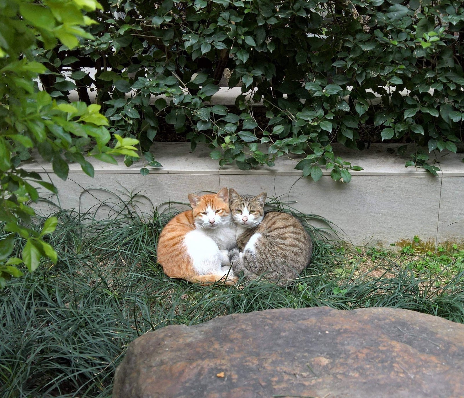 Funny cats - part 276, funny cat image, best cat photo, cat pictures