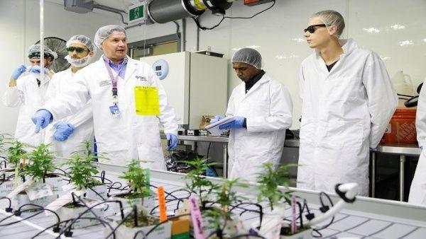 Estudiantes de Canadá aprenderán a cultivar marihuana