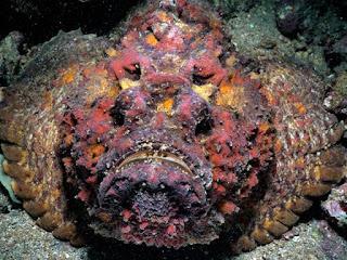 सबसे जहरीली मछली