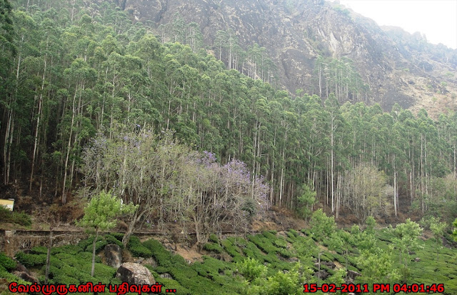 munnar tea plantation visit