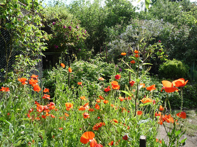 Wildflower and formal borders in an organic forest garden