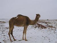 Argelia 2012
