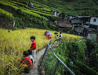 Batad Rice Terraces Golden Harvest
