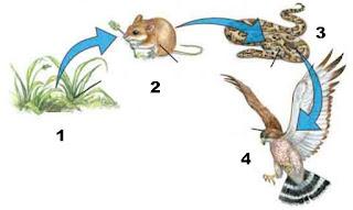 Soal Hubungan Antar Makhluk Hidup dengan Lingkungannya (Simbiosis)
