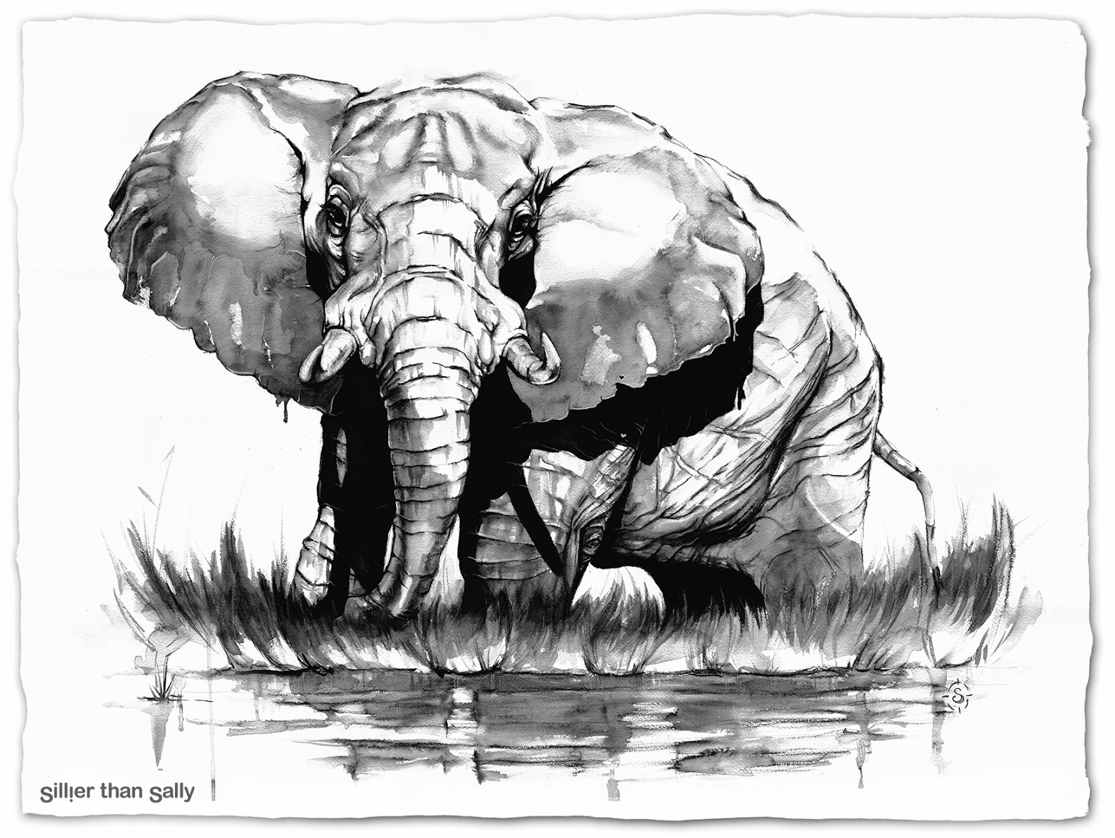 African Elephant Drawing Trunk Up Proud botswana elephant - theAfrican Elephant Drawing Trunk Up
