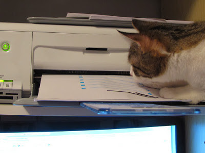 cat waiting for a printer test page by pirate johnny