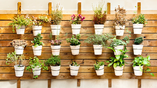 Plant solutions for indoors - Wallfarm creates clean air