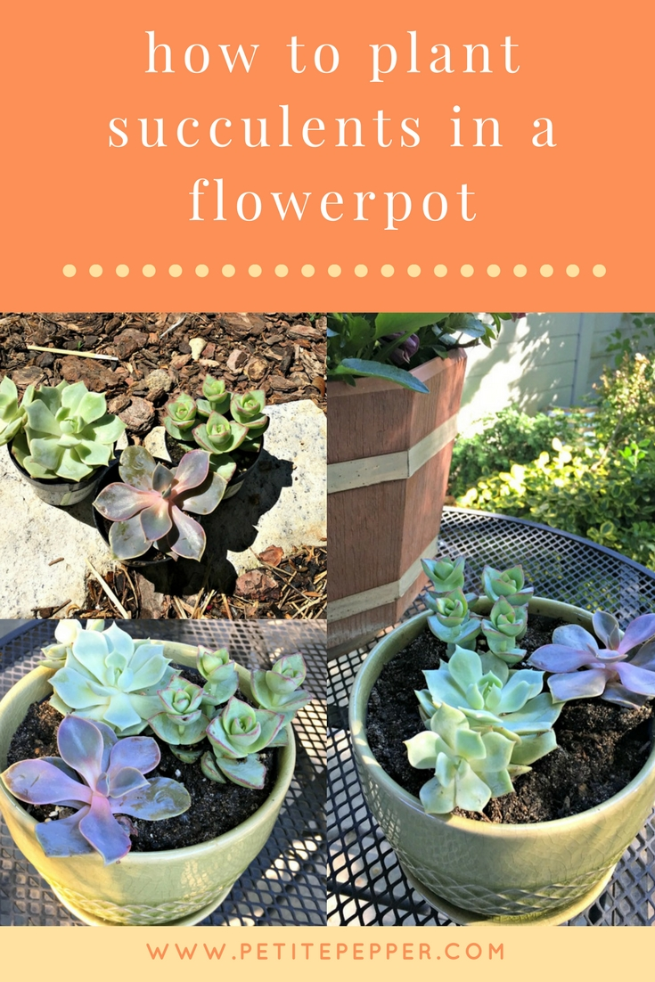 how to plant succulents in a flowerpot pinterest
