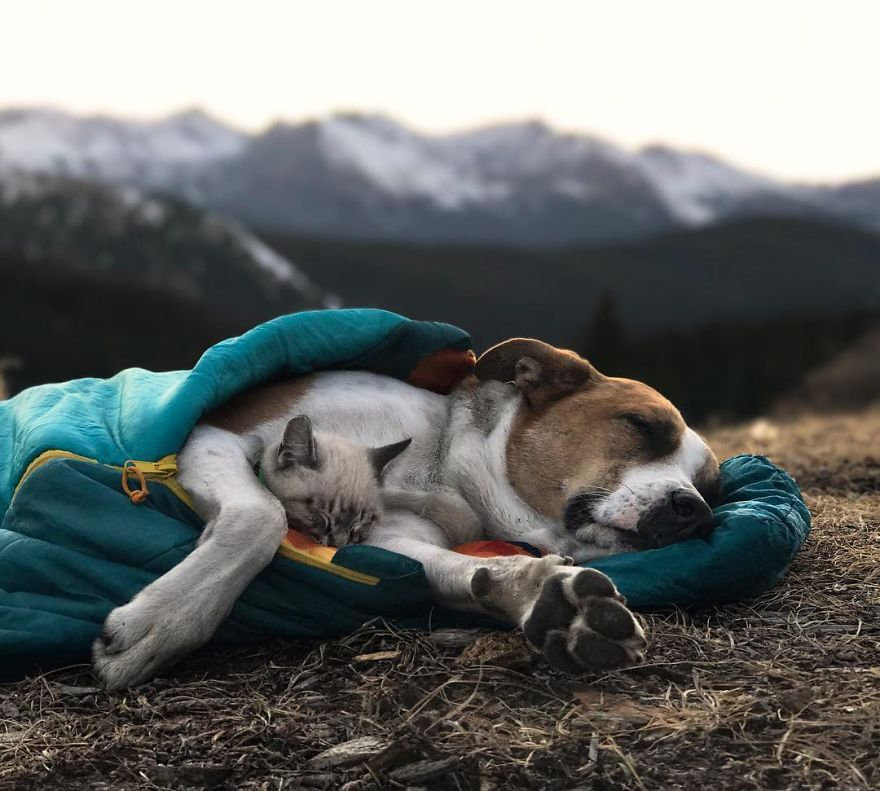 This Cat And Dog Love Travelling Together, And Their Pictures Are Absolutely Epic