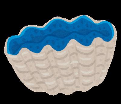 シャコガイのイラスト
