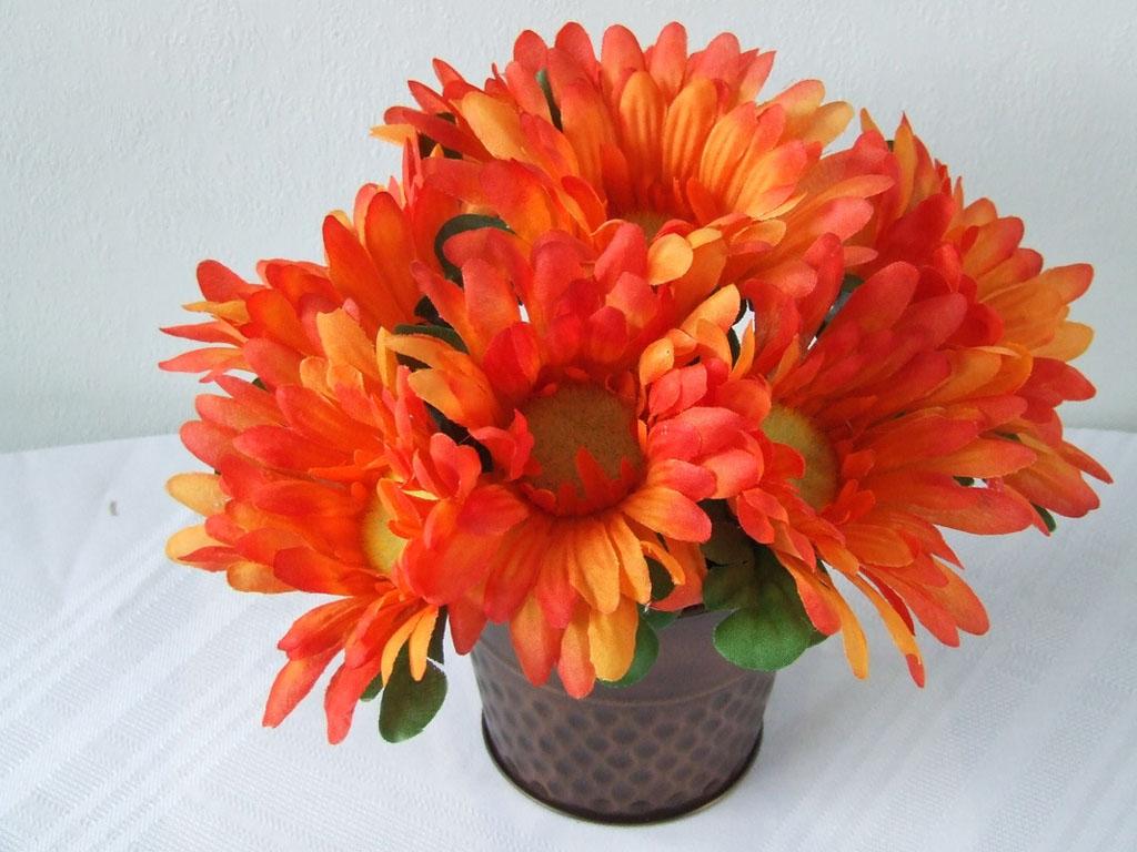 wallpapers: Orange Gerbera Daisy Flowers Wallpapers
