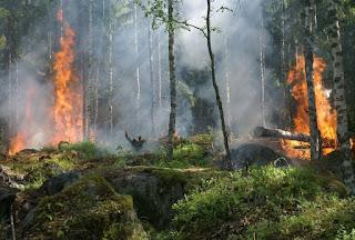 BMKG Imbau Masyarakat Agar Waspada Peningkatan Kebakaran Hutan di Sumatera dan Kalimantan