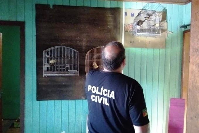 Polícia Civil apreende centenas de aves silvestres em Gravataí