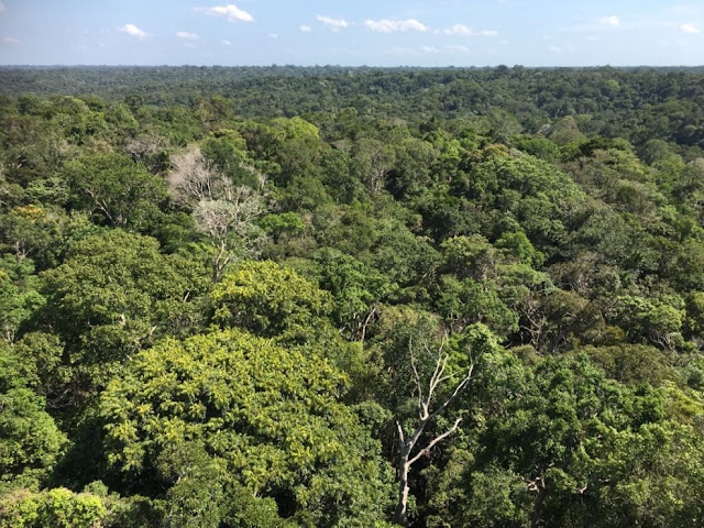 Amazônia: como organizar uma viagem por conta própria com criança, pela Marisa