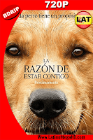 La Razon De Estar Contigo (2017) Latino HD BDRip 720p - 2017
